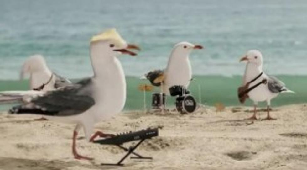 Tv Commercial Features A Flock Of Seagulls Singing A Flock Of