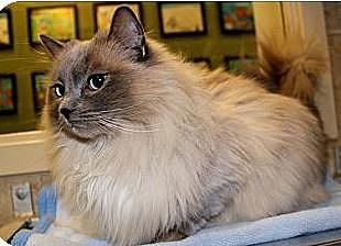 Phoebe: Photo courtesy of Animal Allies