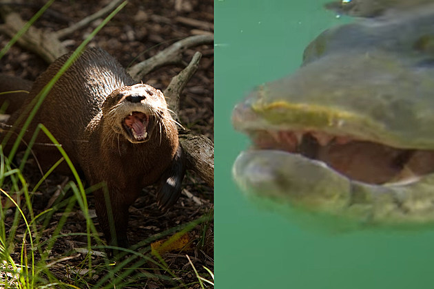 (Left)  Allison Shelley/Getty Images - (Right) ProFishermanJones on YouTube